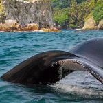 ballena-gorgona