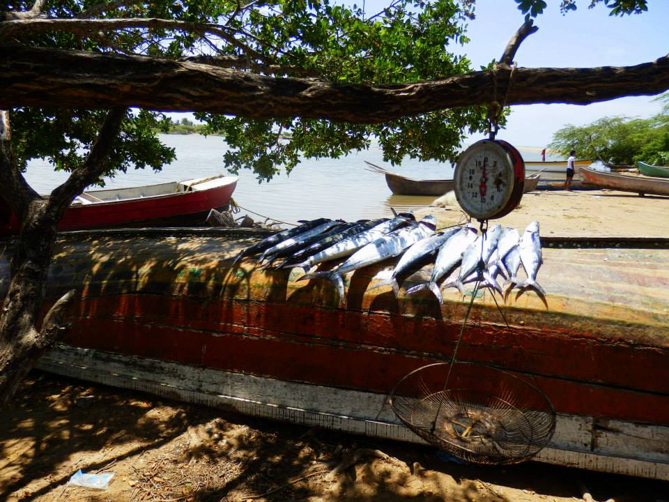 la-guajira-vissers1