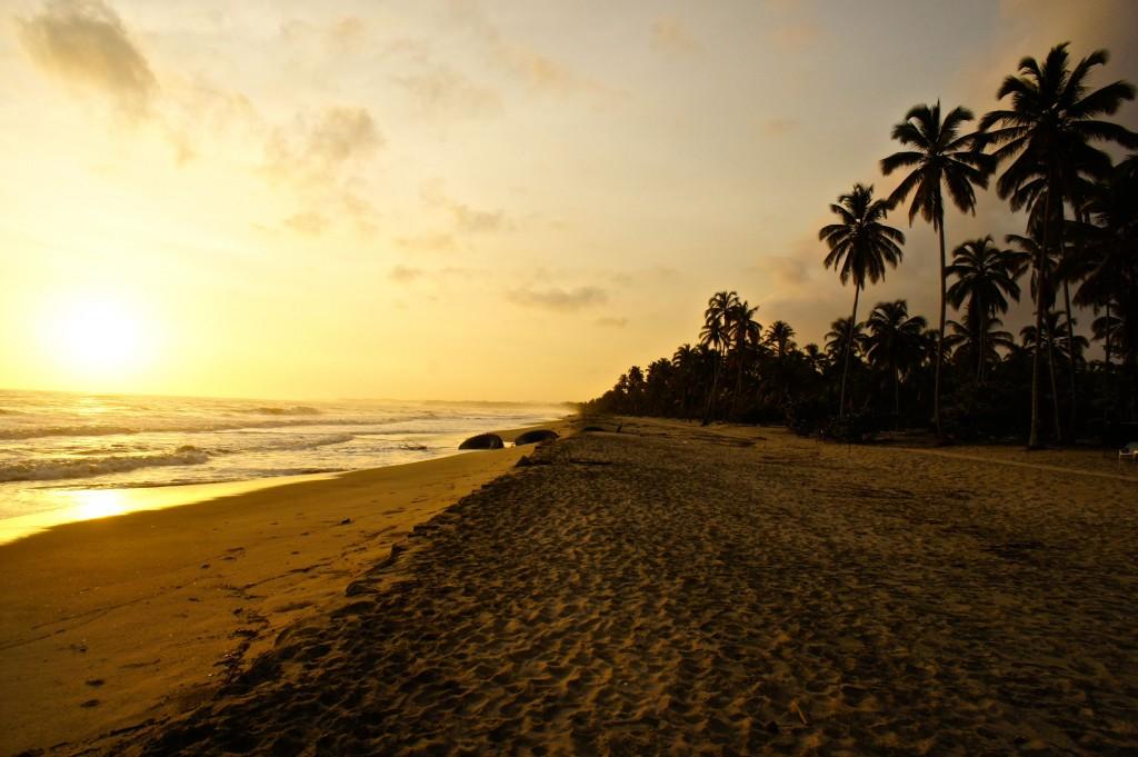 palomino playa